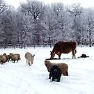 ALL SORTS OF ANIMALS IN THE SNOW  by MsLiz