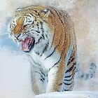 Siberian Tiger in snow by Tarrby