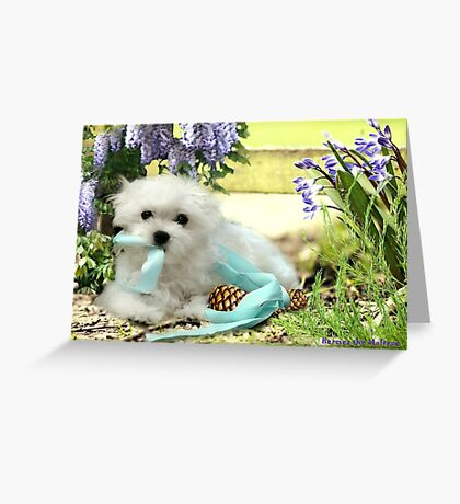 Hermes the Maltese - My Little Imp ! Greeting Card