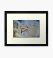 Sloth in Tree Framed Print