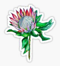king protea  Sticker