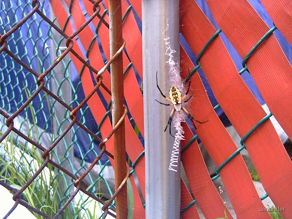 Spider on a fence by windrider