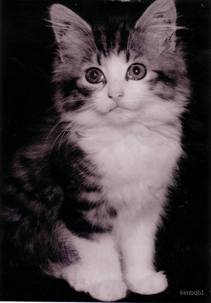 yes i am cute by kimbob1