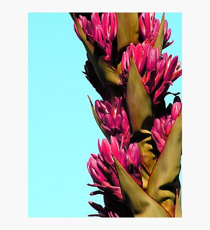 Agave flower Photographic Print