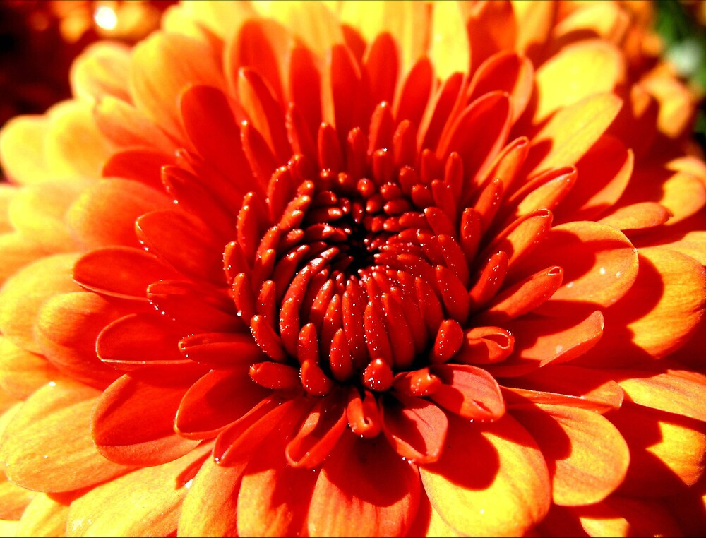 Flower by Tommy Seibold
