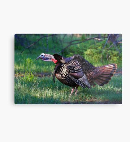 Wild Turkey Call Metal Print