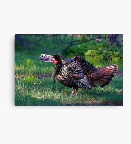Wild Turkey Call Canvas Print