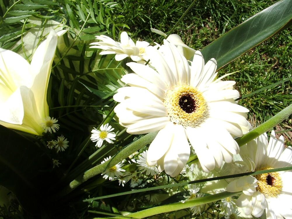 Daisy by bobbijo07