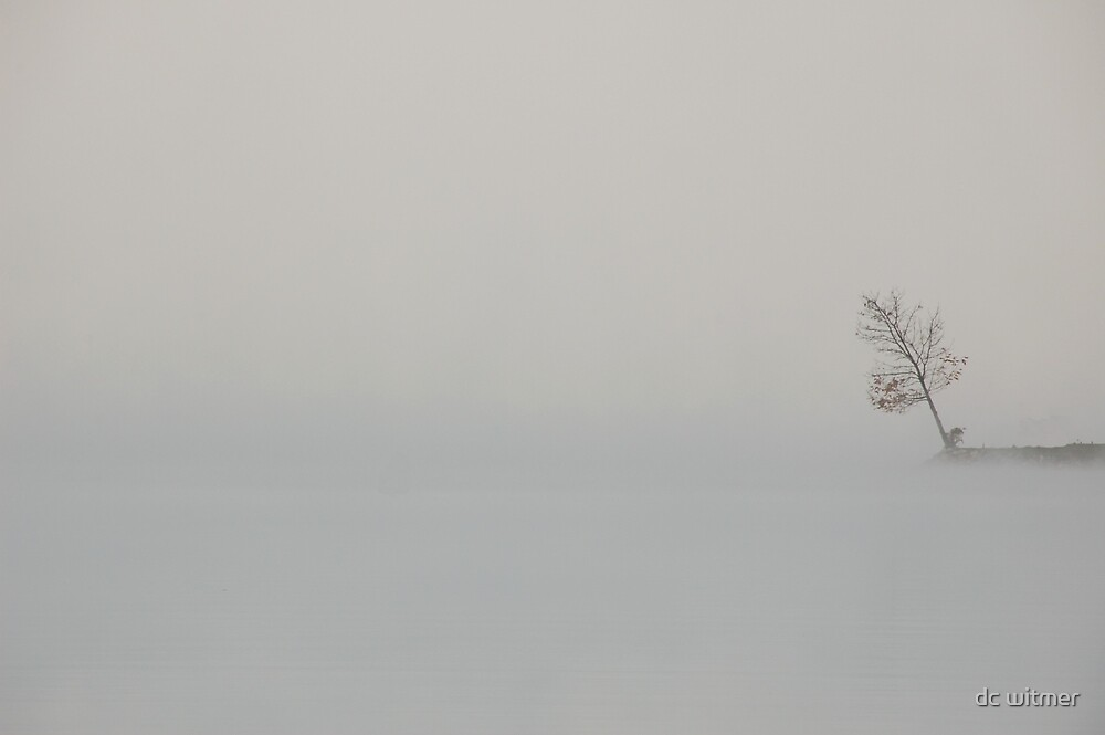 what do you see? just a tree? by dc witmer