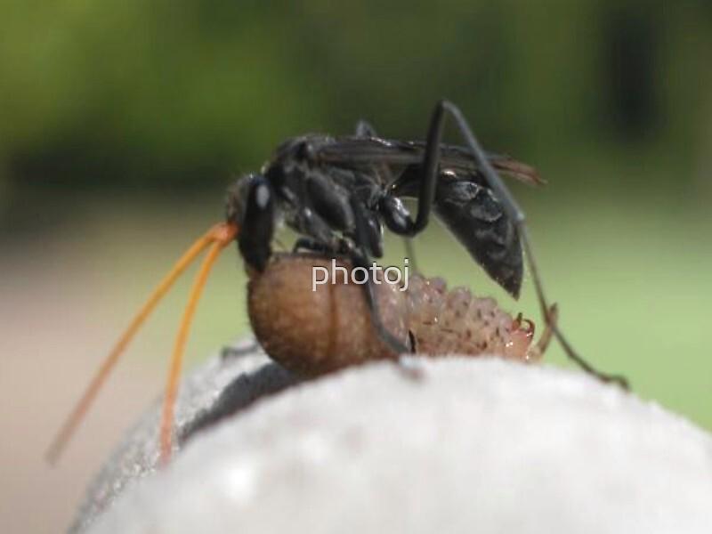 photoj  Bug Delights by photoj