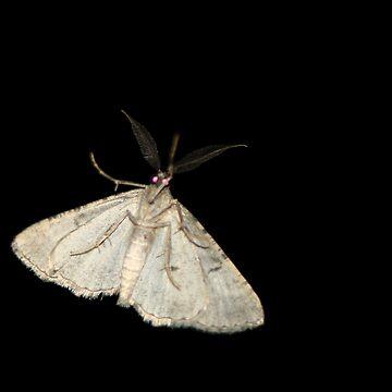 Moth On My Door by supertin
