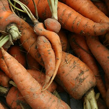 Carrot Cuddle by lje00
