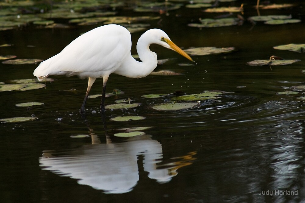 Egret by Judy Harland