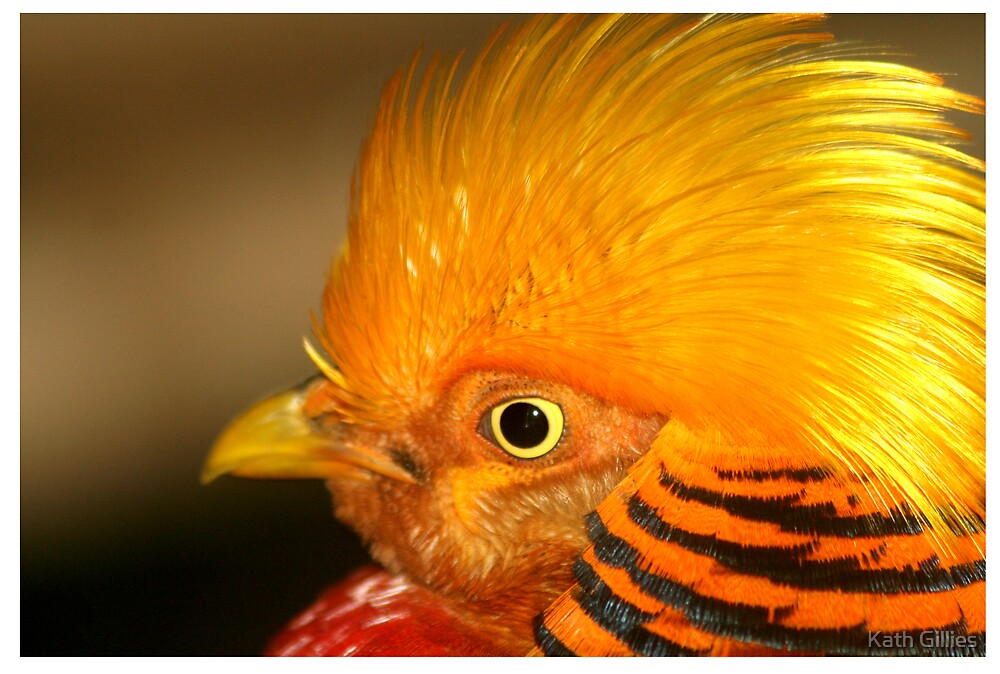 golden plumes by Kath Gillies