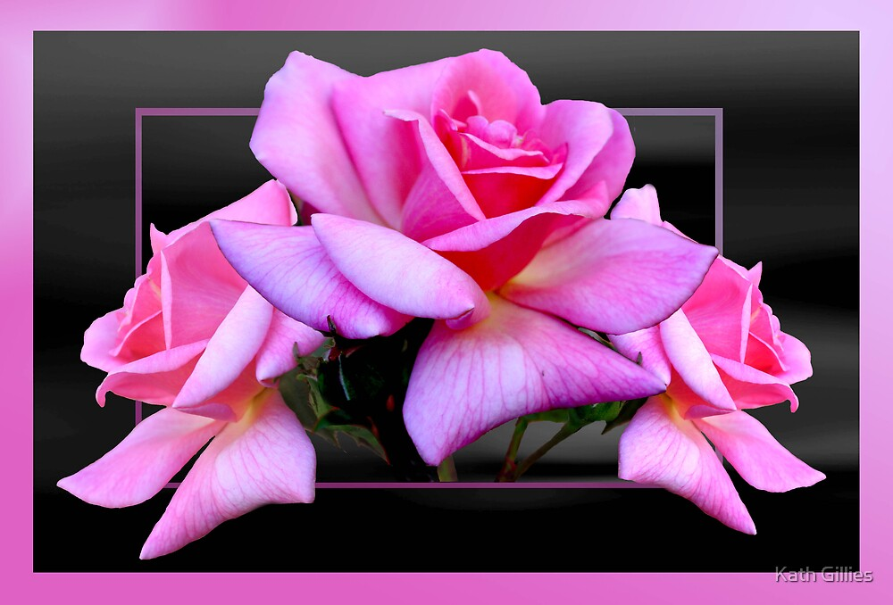 3 Pink Roses by Kath Gillies