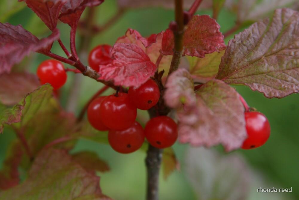 Wild Cranberries by rhonda reed