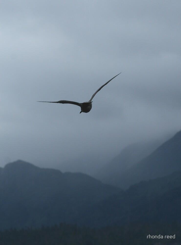 Silhouette in flight by rhonda reed