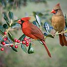 Northern Cardinal Pair on Holly Branch by Bonnie T.  Barry