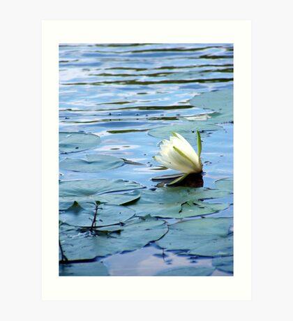 Evening Bloom Art Print