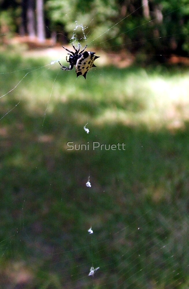 Along Came A Spider by Suni Pruett