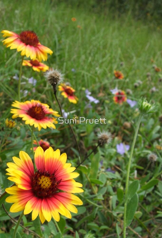 Wildflowers by Suni Pruett