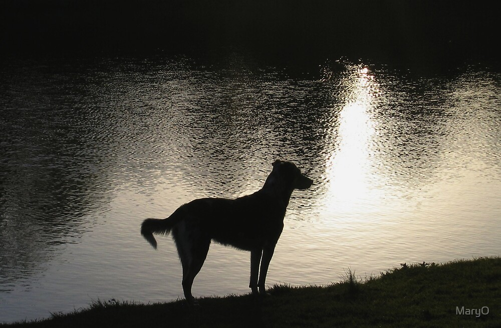 Watch Dog in Black by MaryO