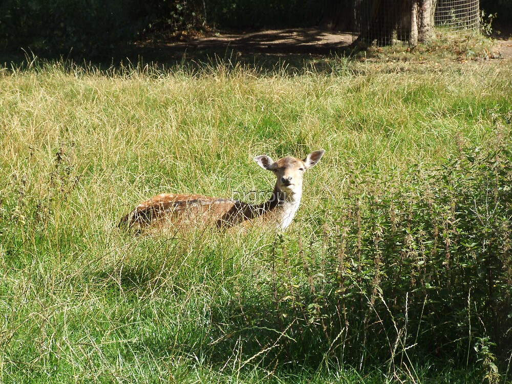 The  Deer  in the sun by bigroy
