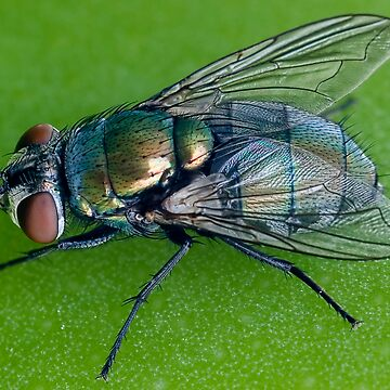 Green fly by cjmalcolm