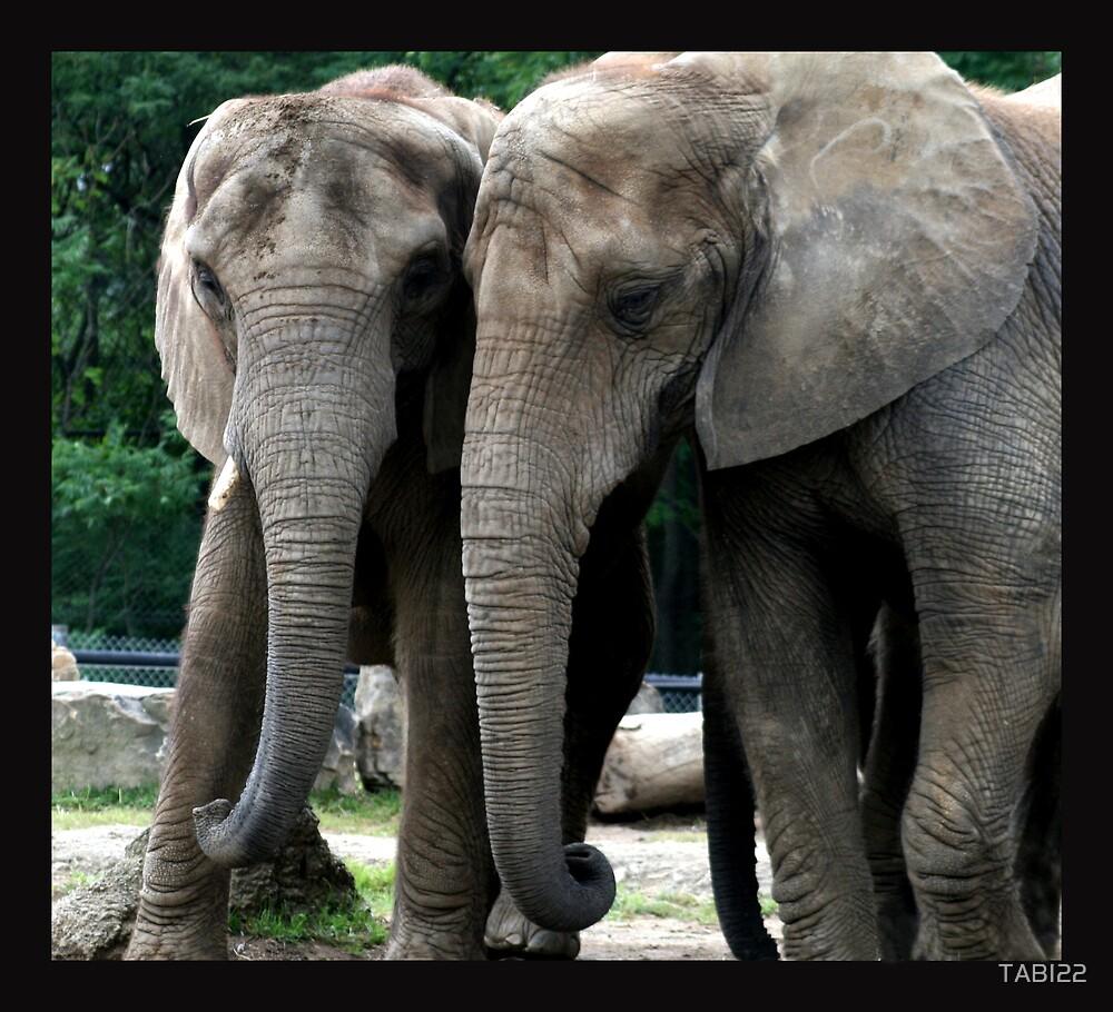 Elephants care too. by TABI22