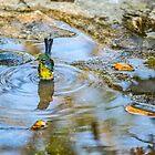 Colorful Bird by barkeypf