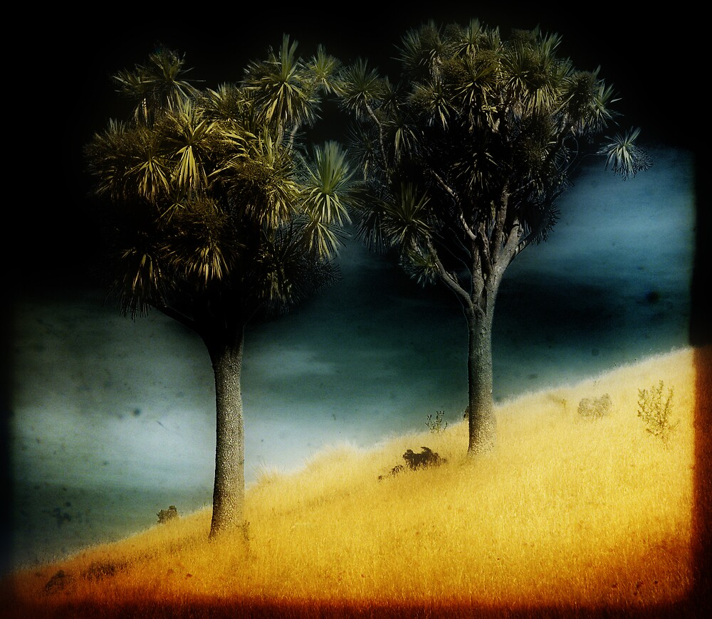 Cabbage Trees by atrei