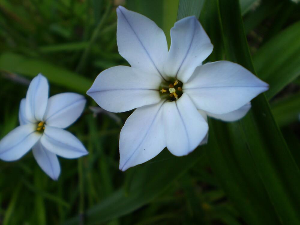 Blue Flowers by bobbijo07