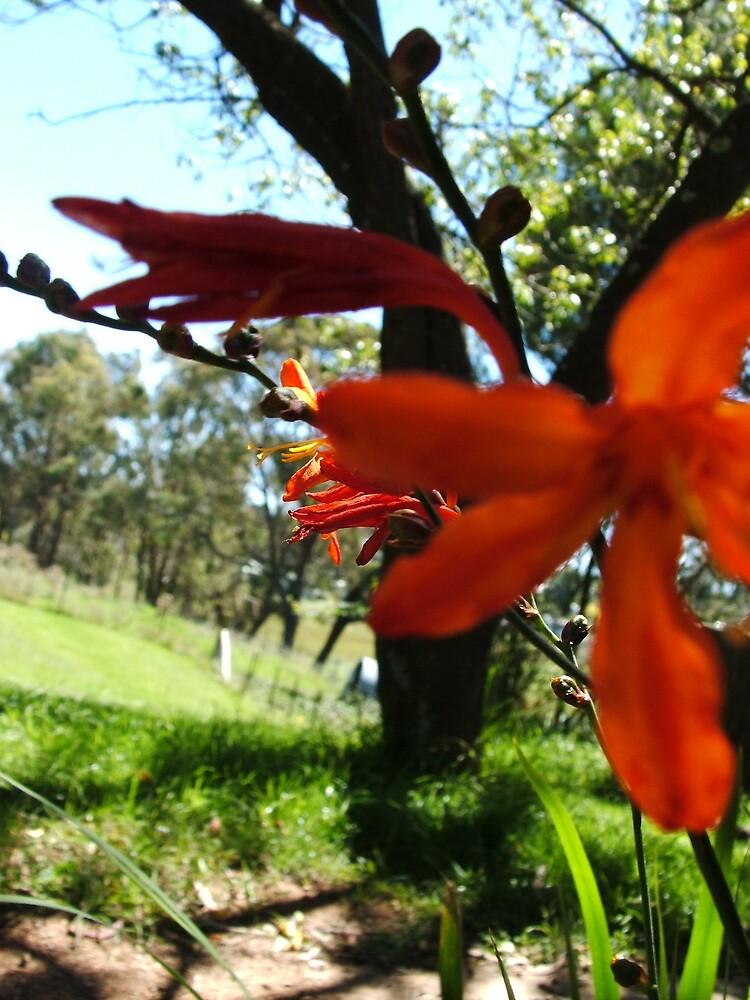 Orange Flower by bobbijo07
