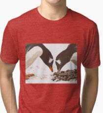 A gentoo penguin couple preparing their nest Tri-blend T-Shirt