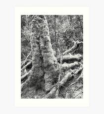 Huon Pine - Heritage Landing Art Print
