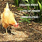 WINNERS BANNER - A Little Bit Country by EdsMum