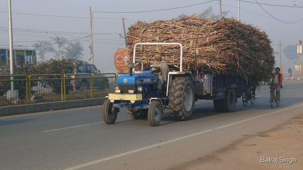 Got Sugar Cane? by Balraj Singh