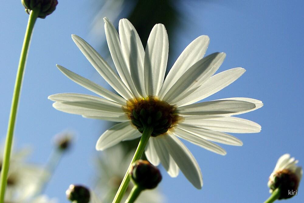 Daisy by kiri