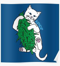 Vegan Cat Poster