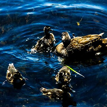 Family of Ducks (BLUE) by laurenbull16
