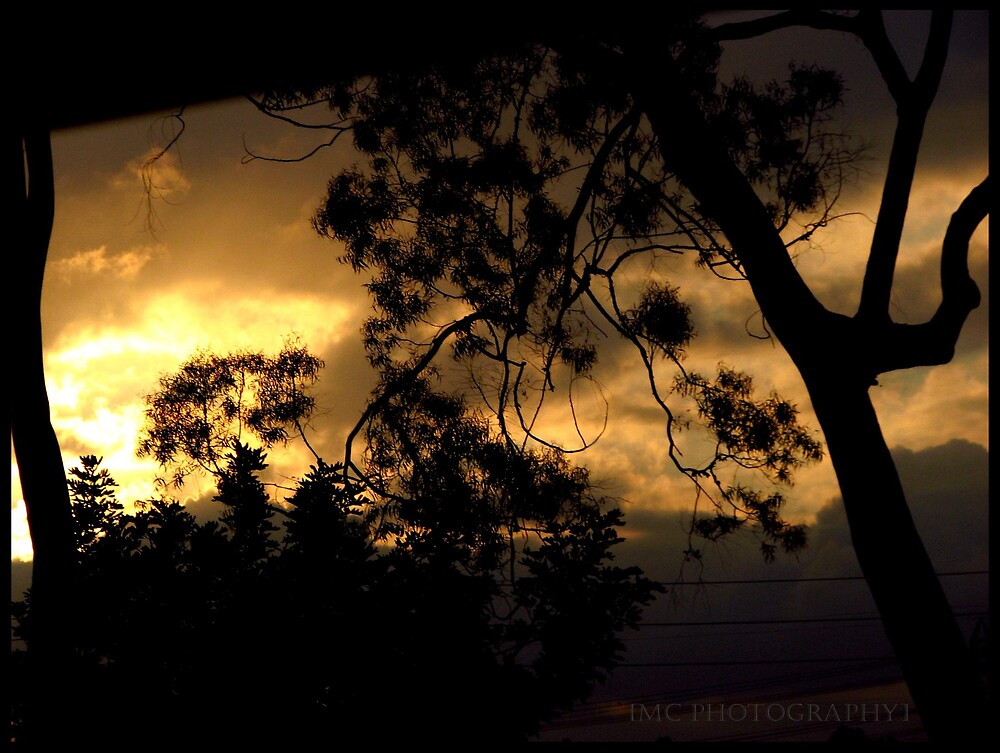 Silhouette trees by Melissa  Carroll
