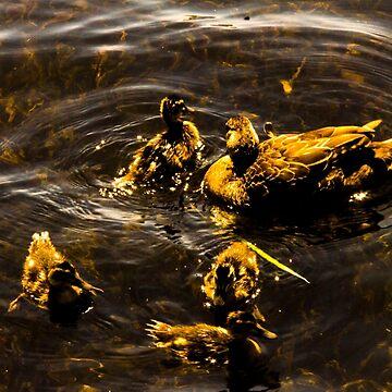 Family of Ducks (GOLD) by laurenbull16