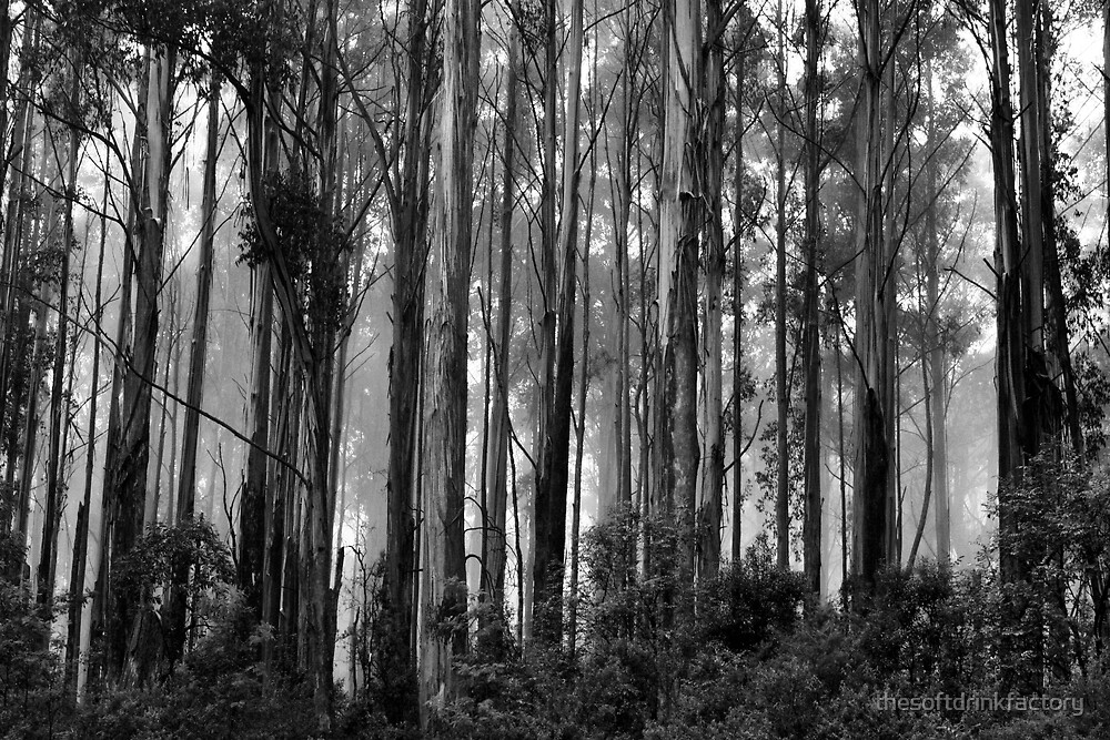 The Trees Of Murrindindi by thesoftdrinkfactory