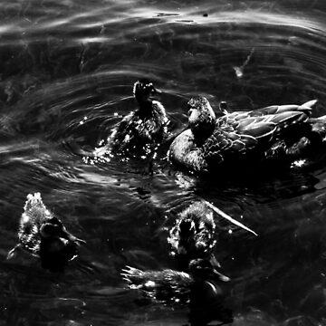 Family of Ducks  by laurenbull16