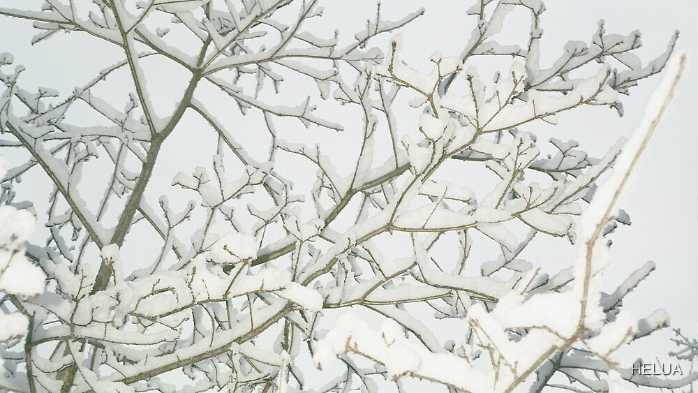 Forest in winter by HELUA