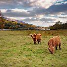 Scottish Autumn by almaalice