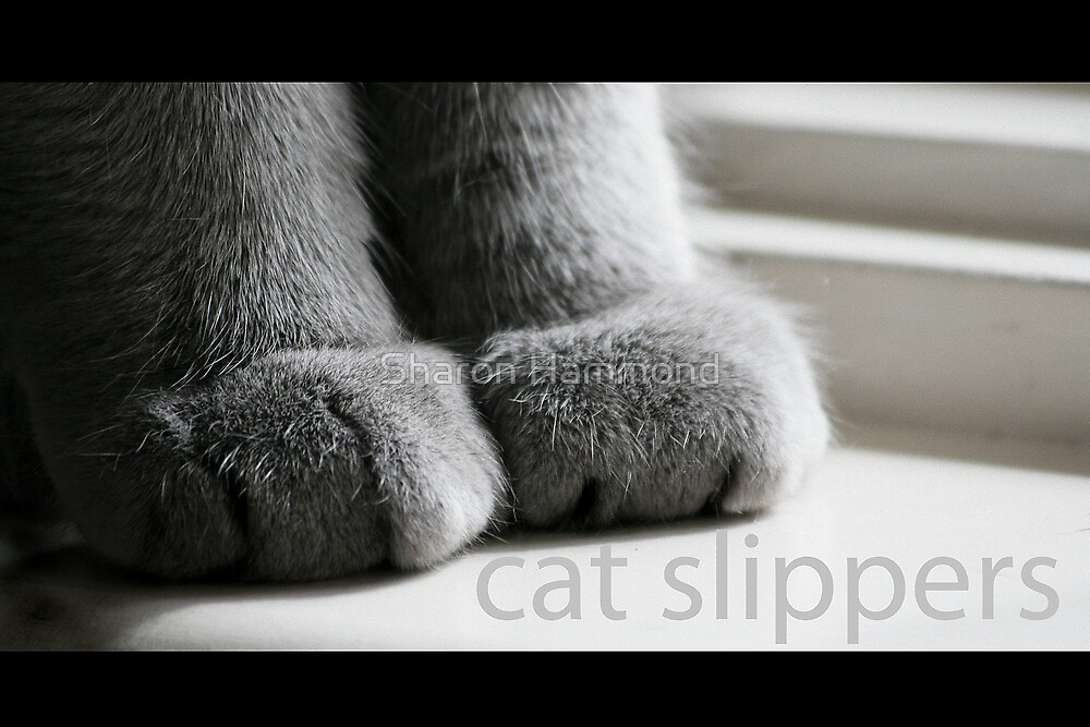 Cat Slippers by Sharon Hammond