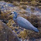 Heron by Mark Greenmantle