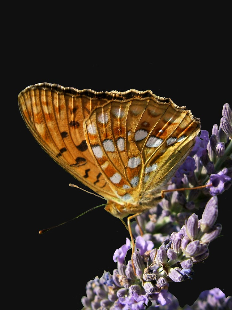 Butterfly by Wimley