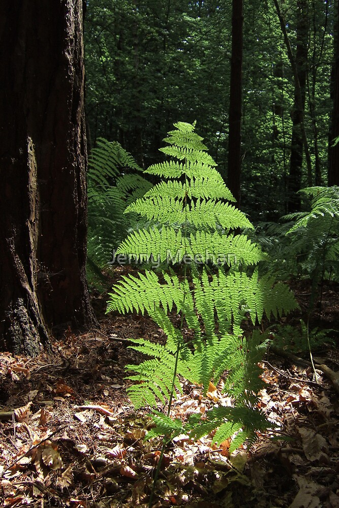 Fern colour version by Jenny Meehan
